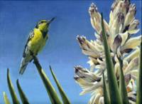 Meadowlark and Yucca