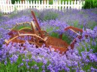 Lavender and Rust
