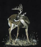 Whitetailed deer painting