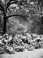 Snow in Carl Schurz Park, NYC