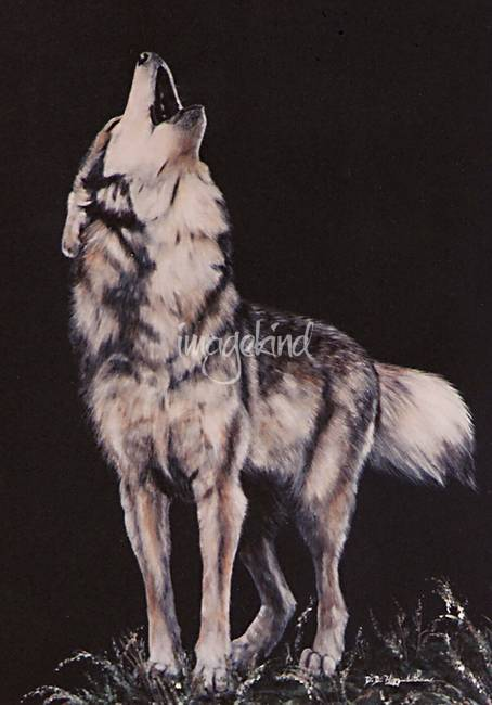 "Stunning ""Coyote"" Artwork For Sale on Fine Art Prints"