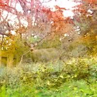Deer Out Back by Faye Cummings
