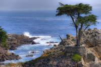 The Lone Cypress by Paul Gaither