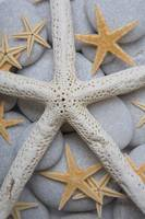 Starfish on Pebbles