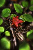 Fall Leaves by Jim Crotty 9