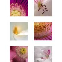 Pink and White Flower Squares Art Prints & Posters by Emily Goodwin