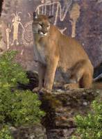 Cougar and Pictographs - Pastel