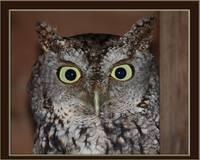 Owls gallery