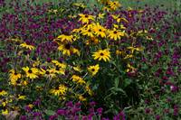 Yellow and Purple Flowers Maymont Park