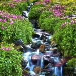 """Alpine Wildflowers in Glacier National Park"" by jimcrotty"