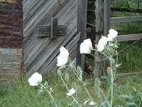 Barn Door with Thistles
