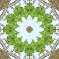 Bark Leaves Stone Kaleidoscope Art 5