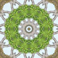 Bark Leaves Stone Kaleidoscope Art 6