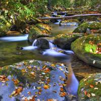 Stream in Autumn Great Smoky Mountain NP by Jim Crotty
