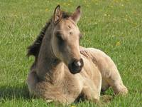 Foal in the Field