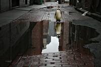 Alley Penguin