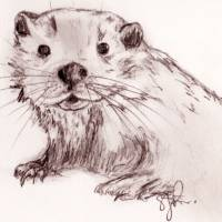 Otter sketch Art Prints & Posters by Sarah Ratcliff