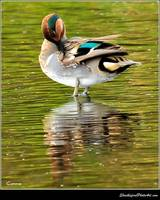 Green Teal Reflecting