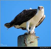 The Osprey at Provo