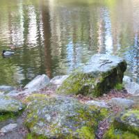 Duck Pond by Faye Cummings