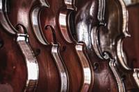 Violins in Music Store Repair Shop Dayton