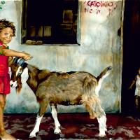 Costa Rica Ranch Children Playing with Goat Art Prints & Posters by Sunshine Qualls