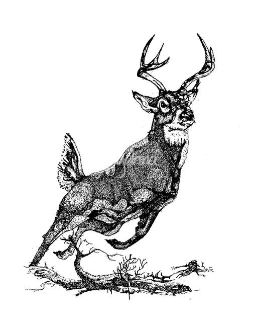 stunning  u0026quot whitetail deer u0026quot  drawings and illustrations for