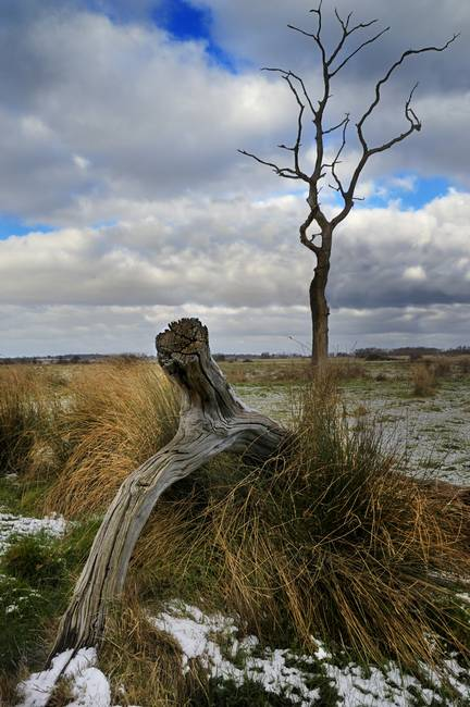 Tree on Oulton Marshes