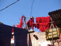 morocco wool dyer 002