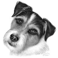 Wire-Haired Jack Russell Terrier