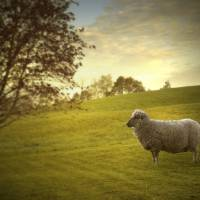Countriside Art Prints & Posters by Robert Cattan