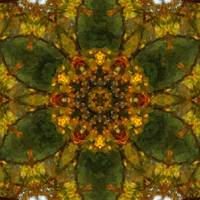 Autumn Delight Kaleidoscope Art 3 by Christopher Johnson