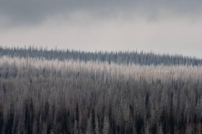 Winter Forest, Utah