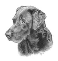 Ghira - Chocolate Lab