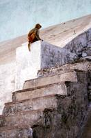 Monkey at the Ghats, Varanasi