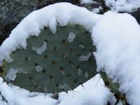 A cactus weathering winters touch