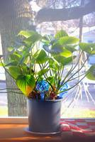 Our Plant George