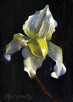 White Ladies Slipper Orchid by artist Hall Groat II. Giclee prints, art prints, a still life, fine art print; from an original oil painting