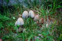 Mushrooms, Grass and Clover Photograph