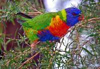 A splash of colour and beaks - parrots in our Cent