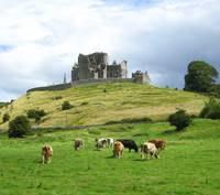 Cattle and the Rock of Cashel