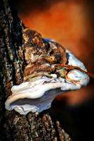 Mushroom On A Tree