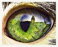 Reflection of a Cat Eye