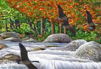 Geese Flying Over ?Stream Waterfall With Deer and