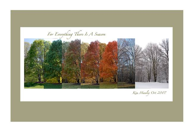 Tree in All Four Seasons