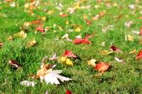 Autumn on the grass