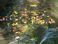 Colored Leaves on Water
