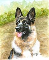 Portrait of a German Shepherd Dog