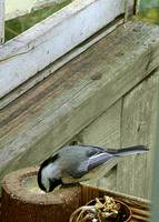 Porch Feeder
