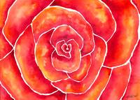 Red-Orange Rose Watercolor